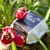 Steinbach - GOLF BOX Easter Edition auf Wiese mit Blumen