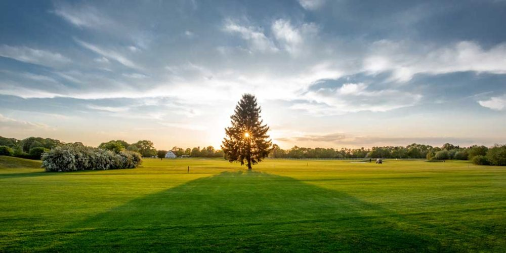 Golfclub München Riem Sonnenuntergang Baum